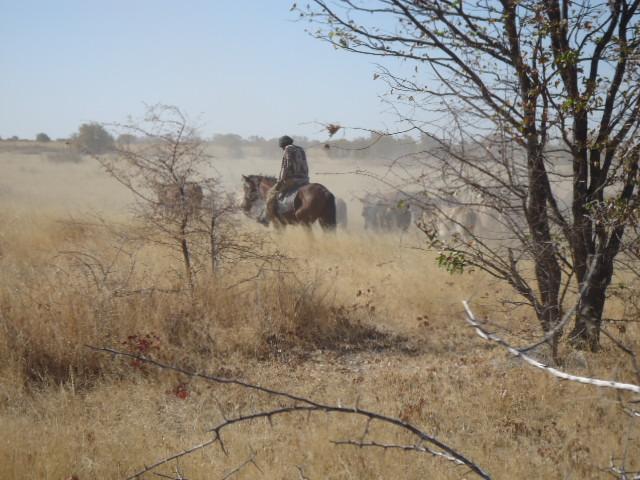ボツワナの馬に乗った牛飼い