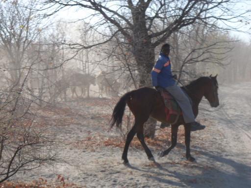 ボツワナ 馬に乗った牛飼い2