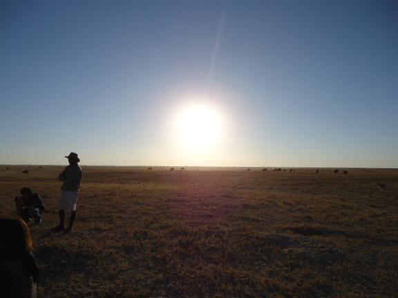ボツワナ サバンナの夕日