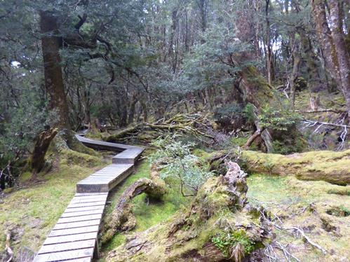 太古の森の中を歩きます