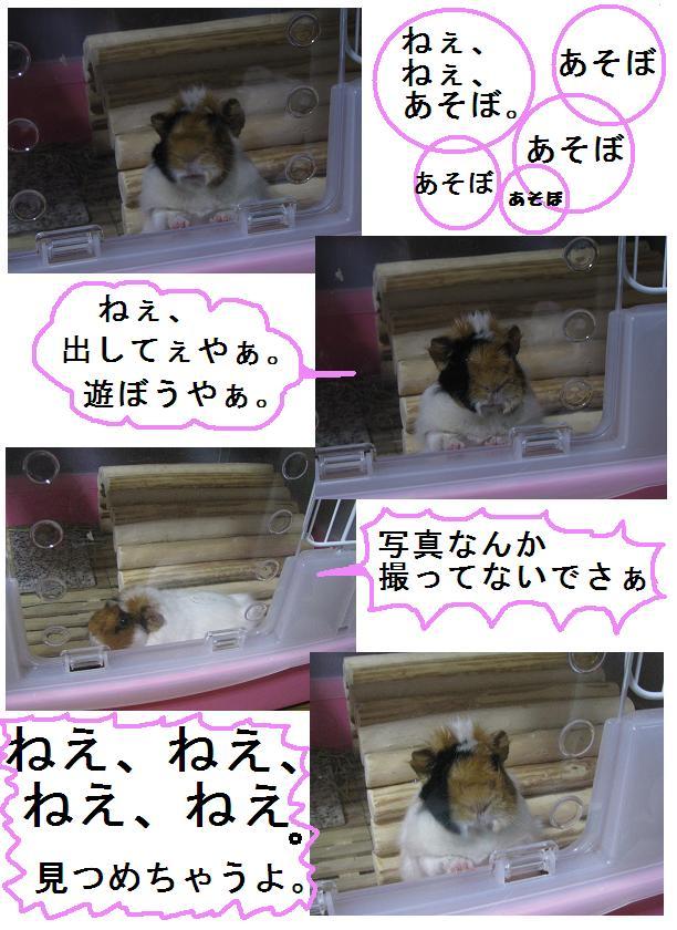 IMG_1335ねえねえねえ