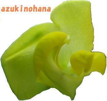 IMG_6014小豆の花