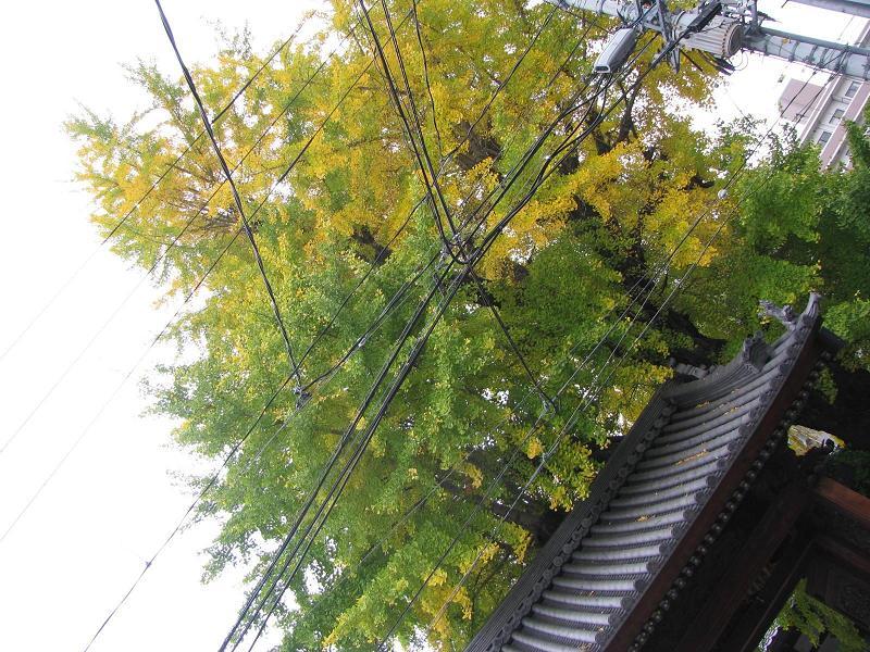 IMG_1599安楽寺