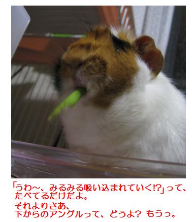 IMG_1667人参くき