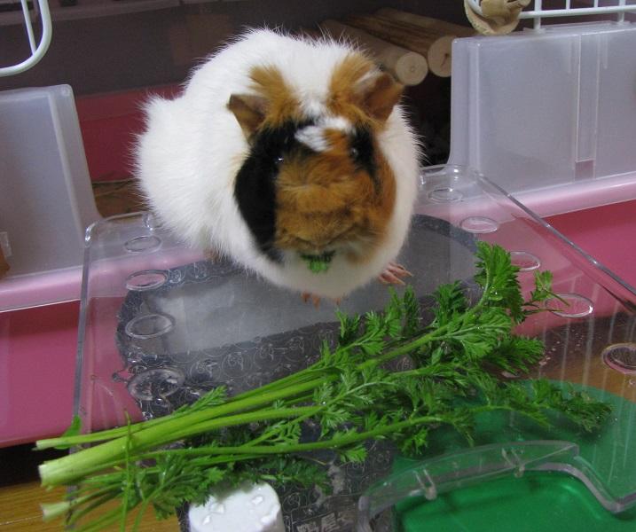 IMG_2040 だれが野菜嫌いなの