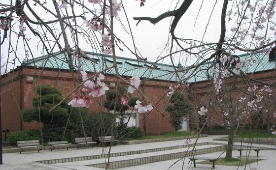 IMG_2066 しだれ桜