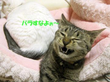 IMG_1656_kodu_un2.jpg