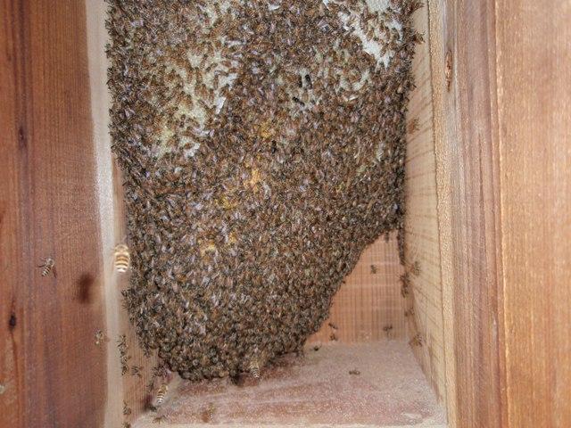 巣箱の様子