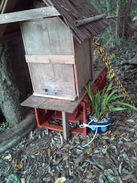 裏の山・分蜂群2012.5.31