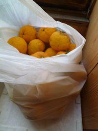 柚子の季節
