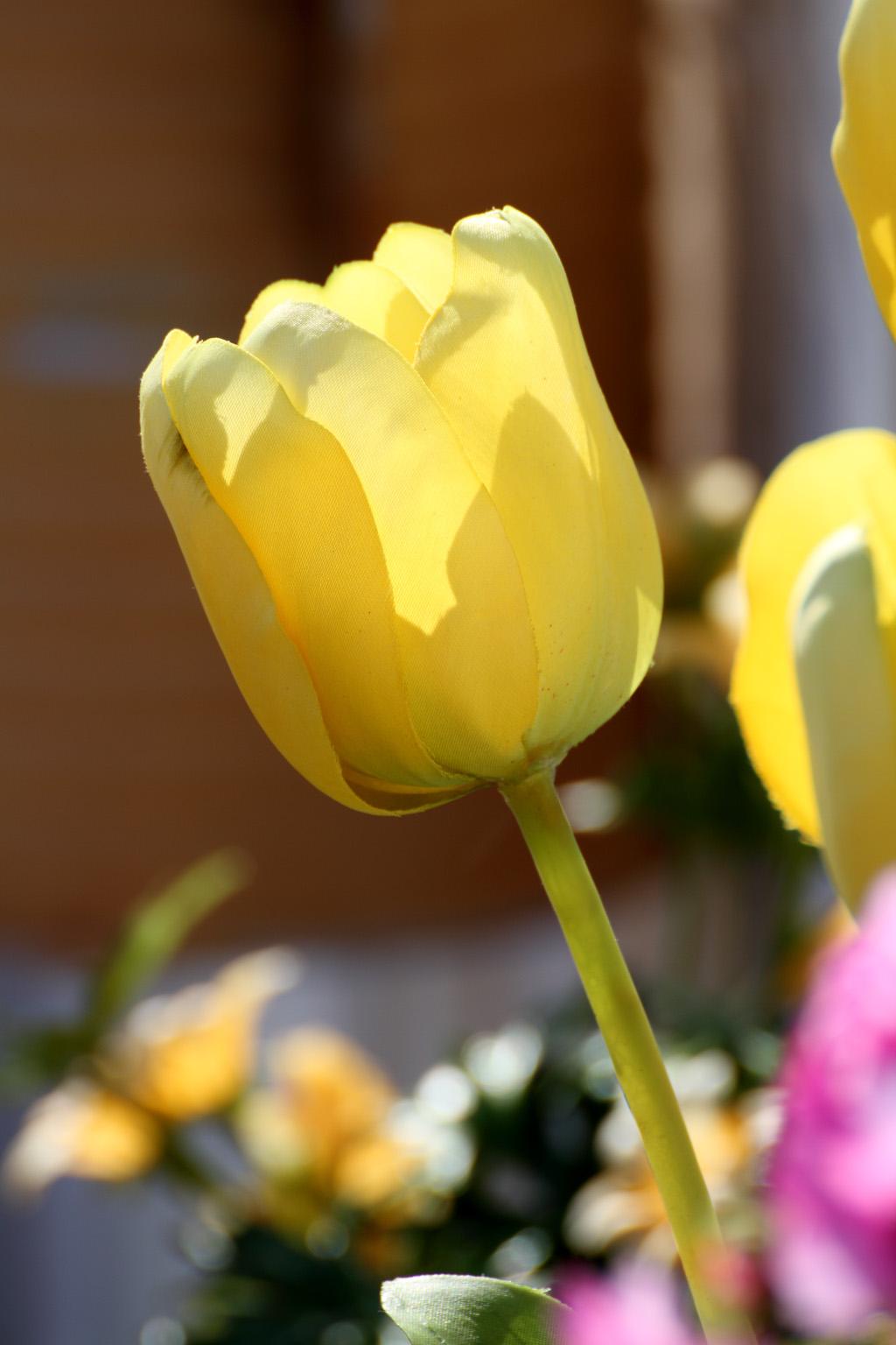 ケープコッドの花