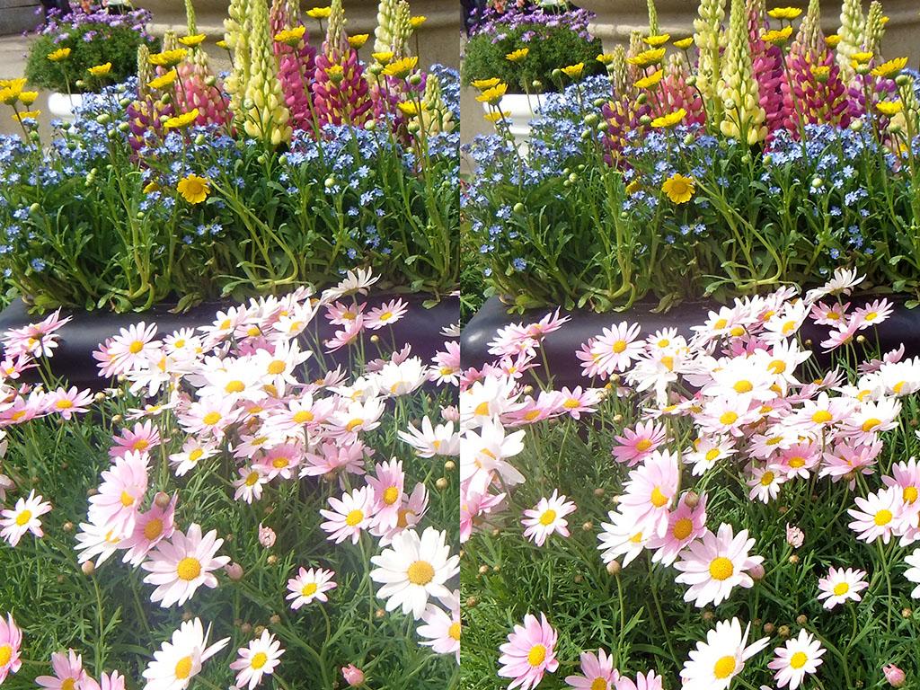 ステレオ写真撮り方比較(6DとFUJIFILM FinePix REAL 3D W3)