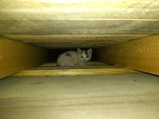 迷子の子猫