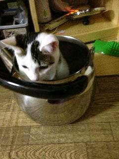 お鍋の中の猫