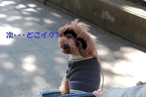 IMG_7999ac.jpg