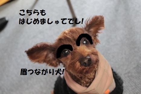 IMG_8114ac.jpg