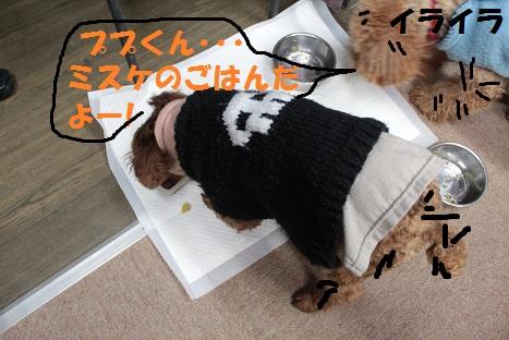 IMG_8129ac.jpg