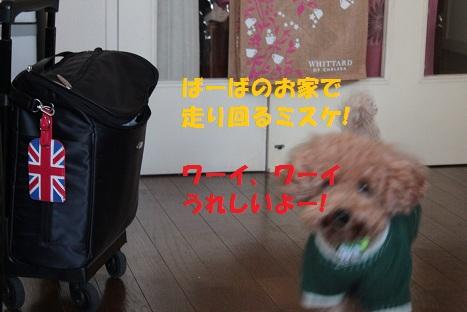 IMG_8250ac.jpg