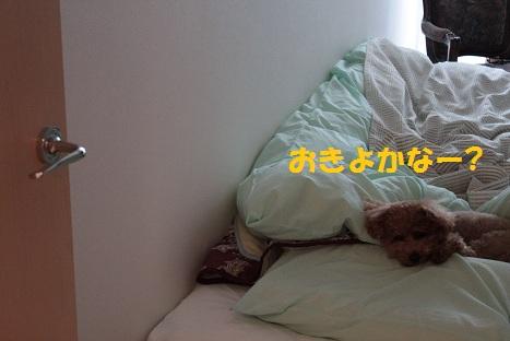 IMG_8322ac.jpg