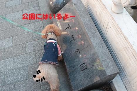 IMG_8716ac.jpg