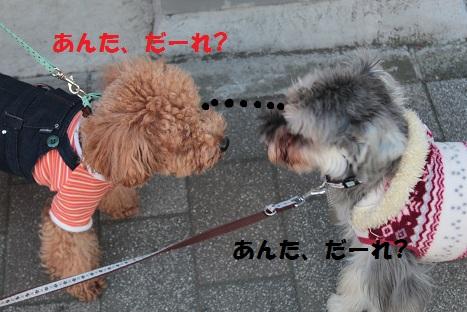 IMG_8718ac.jpg