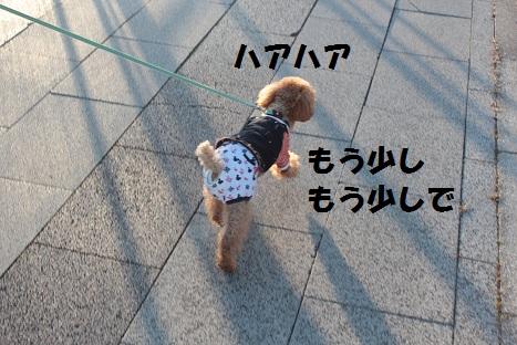 IMG_8799ac.jpg