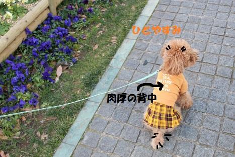 IMG_9017ac.jpg