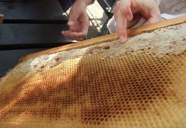 SSP ハチミツの味