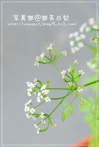DSC_5290.jpg