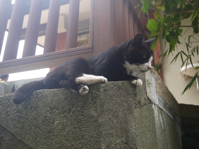 大人しい猫ニャン