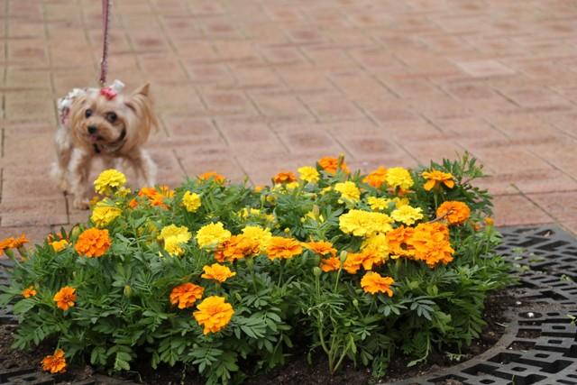 またお花ですか
