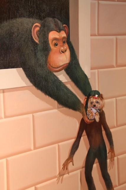 ノンチンパンジー