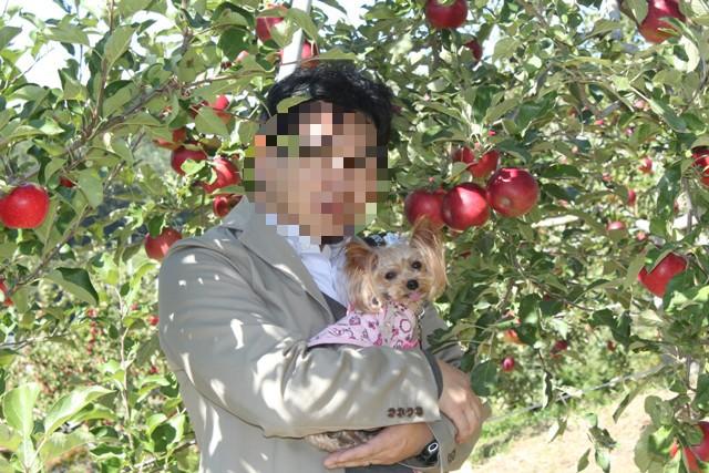 パパとリンゴ狩り