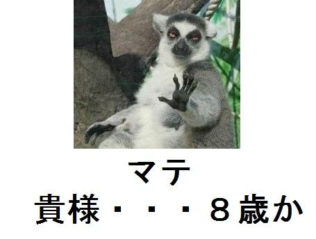 24bf23f96b8b4afc2ef06502ed30eecf_240.jpg