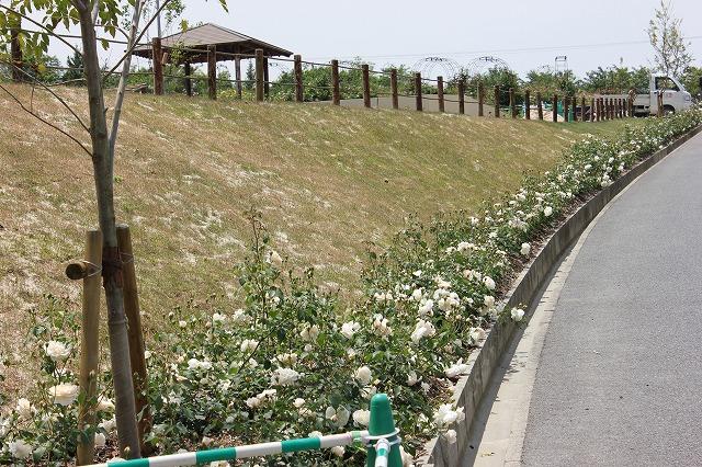 花咲きファーム1