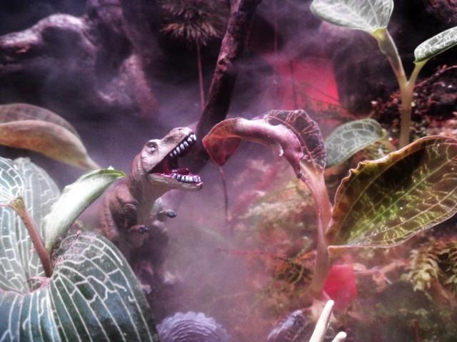 テラノサウルス