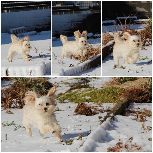 ひめウサギ2