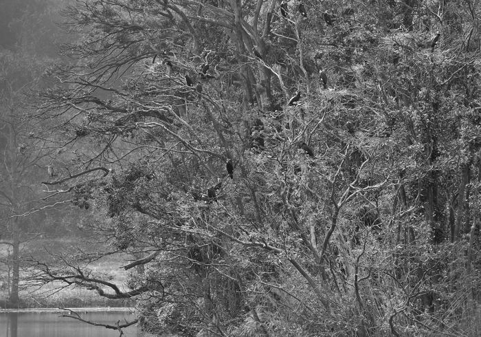 2013-03-09_0096-2b-700.jpg
