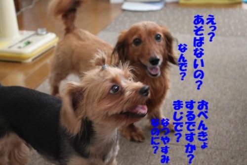 IMG_0310.jpg