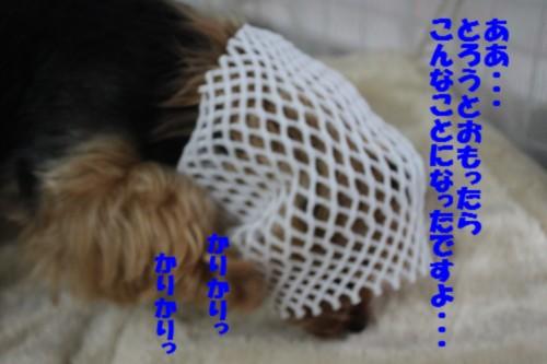 IMG_0705_20120811164648.jpg