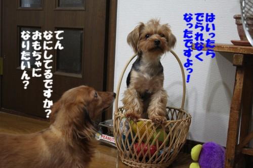 IMG_0791_20120814202354.jpg