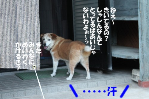 IMG_1015_20120825205954.jpg