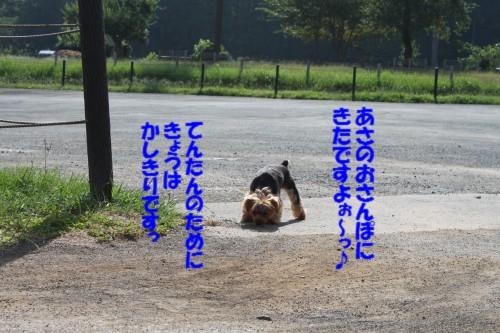 IMG_1114_20120829154241.jpg