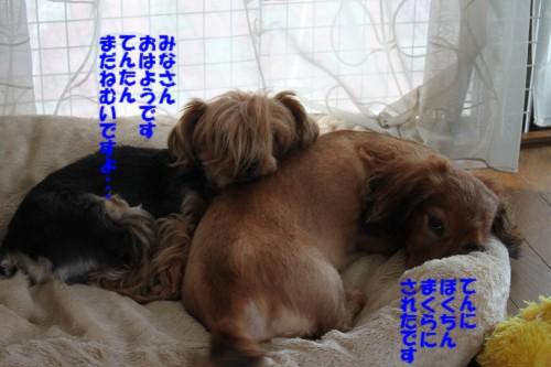 IMG_1313.jpg