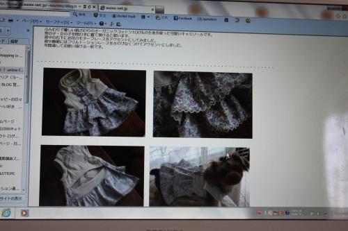 IMG_1356_20120904114704.jpg