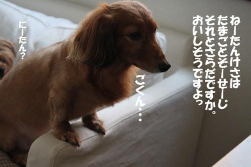 IMG_1415_20120907204104.jpg