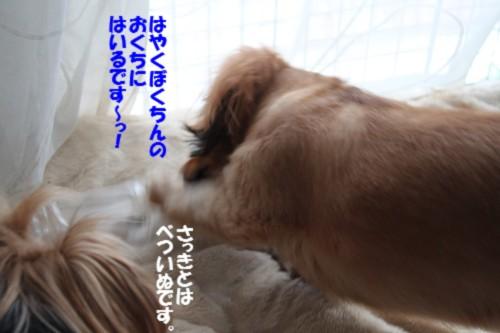 IMG_2123_20120930151728.jpg
