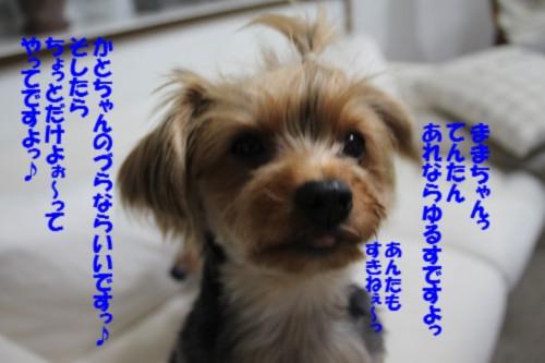 IMG_2251_20121003115710.jpg