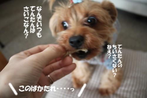 IMG_2848_20121029113328.jpg