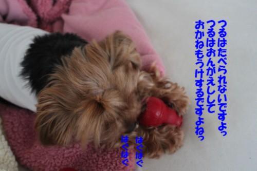 IMG_2929_20121031174038.jpg